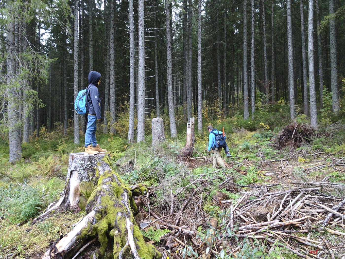 forest-activities