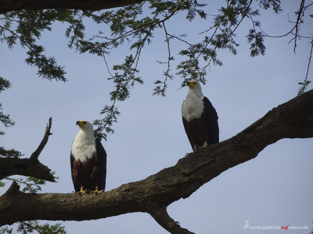 two-eagles