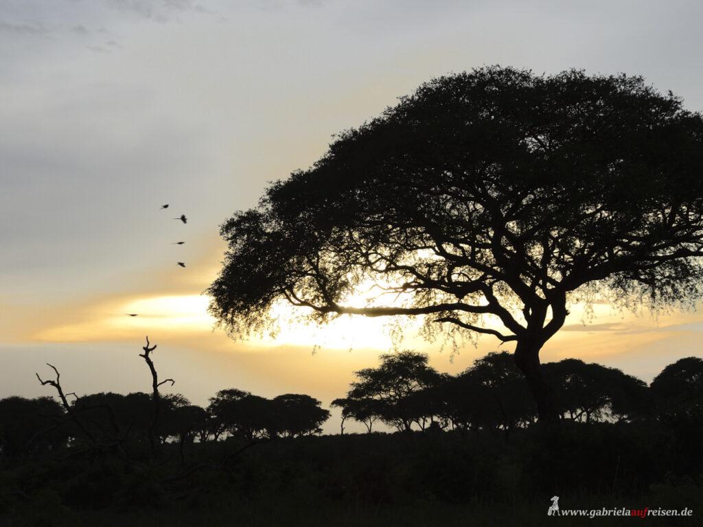 sunset-in-Murchison-Falls-National-Park