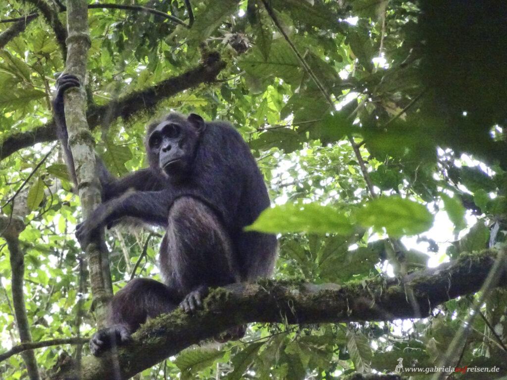 primate-in-kibale-national-park
