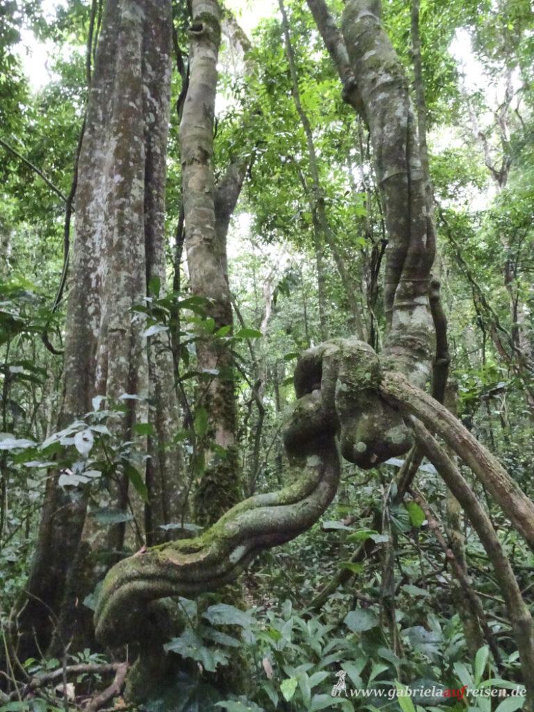 rainforest-in-uganda