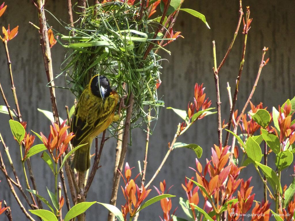 bird-in-a-nest