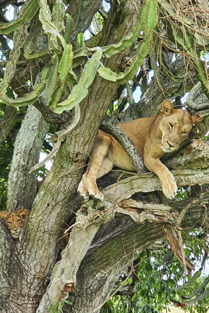 lion-on-a-tree